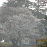 桜の季節2018