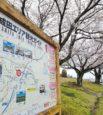 成田ショールーム店からすぐ!今年の桜🌸